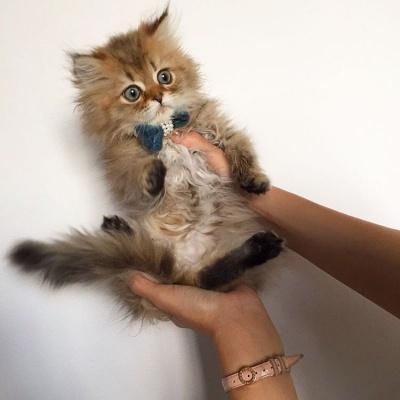 Nikon Cat Instagram