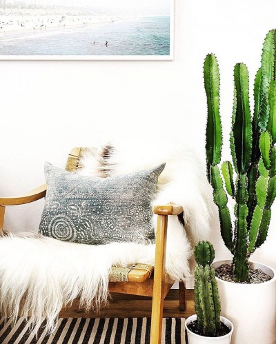 interiors chair with furry throw and cushion cactus plants