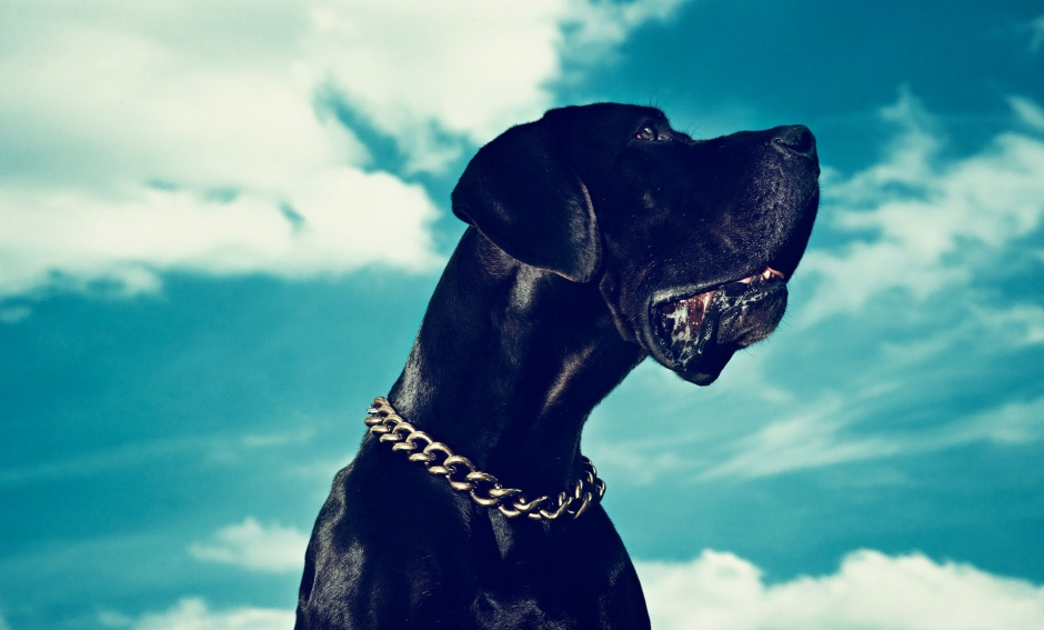 On Engel the dog Necklace by Lanvin