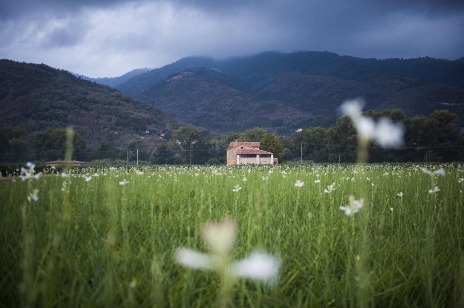 Chanel Grasse fields